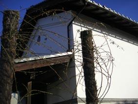 ito-20090124a.jpg