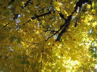 ito-20091127a.jpg