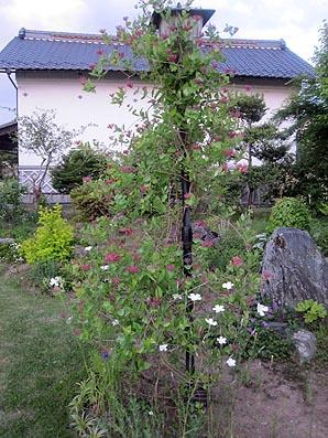 ito-20101209b.jpg