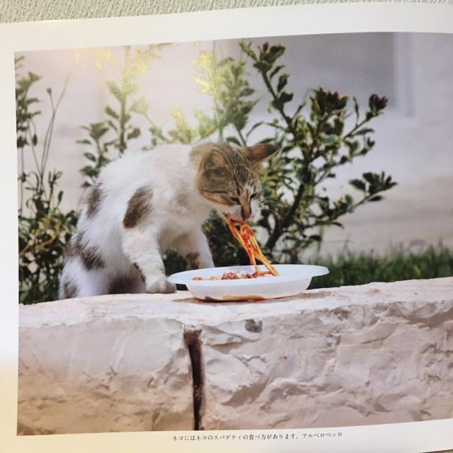 itomataro-写真集 イタリアの猫 スパゲティを食べる猫.jpg