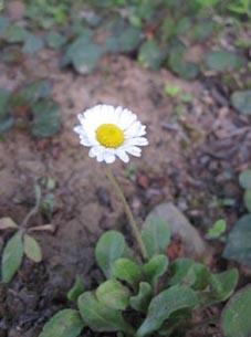 ito-20100519f.jpg