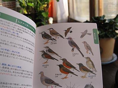ito-20110118b.jpg