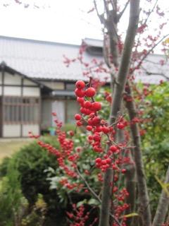 itomataro-20151202a.jpg