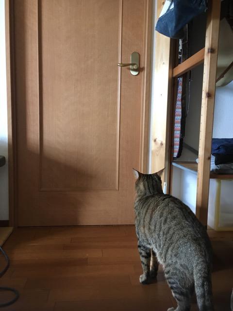 itomataro-20180831a.jpg